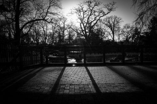 trees fence cobblestone
