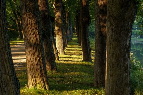 trees vanishing point away