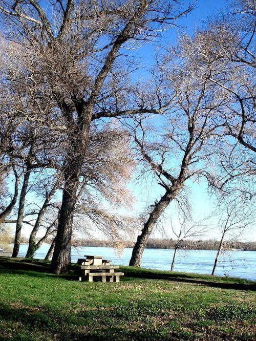 trees river rhône