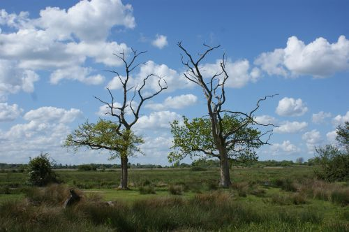 trees marshes blue sky