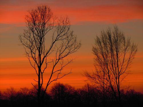 trees sky morgenrot
