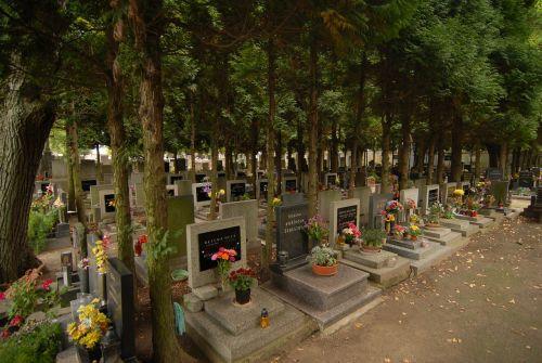 trees cemetery the tombstones
