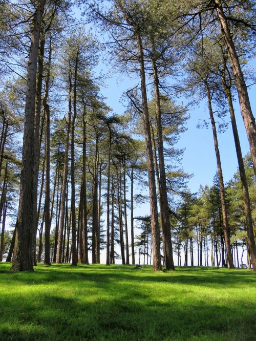 trees tall sky
