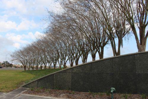 trees curve decoration