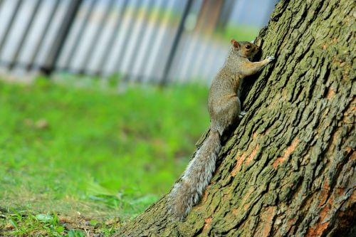 trees squirrel pet