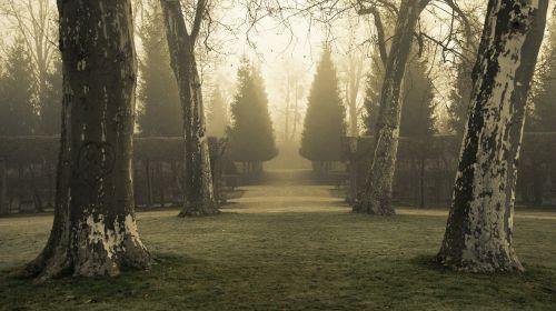 medžiai,parkas,rūkas,mįslingas