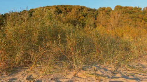 trees autumn sand
