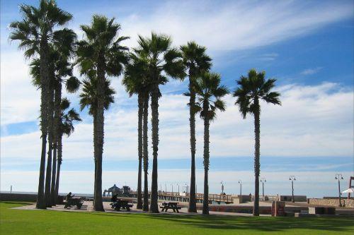 trees palm trees sky