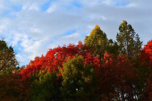 medžiai,lapija,spalva,raudona,ruduo,dangus,saulės šviesa,debesys,gamta,saulėtas,kraštovaizdis,šviesa,šviesus,parkas,lapai,kritimas,Spalio mėn,sezonas,lauke,peizažas,spalvinga,natūralus