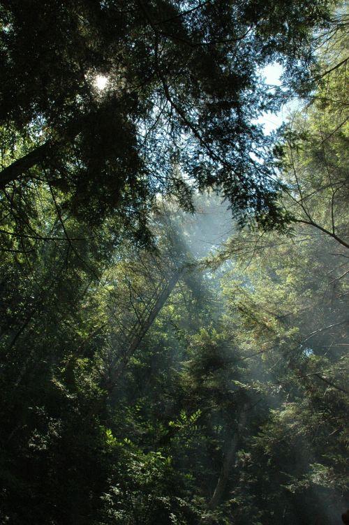 trees sunbeams forest