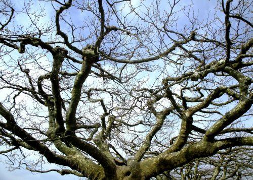 medžiai,plokščių medžiai,baldakimas,Promenada,radolfzell am bodensee,Vokietija