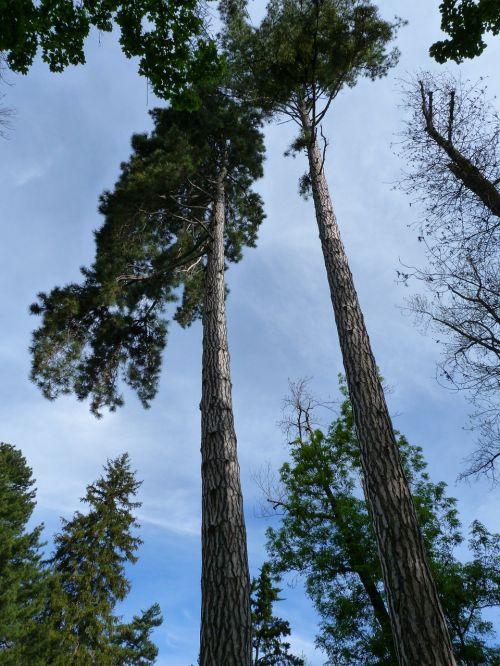 trees nature grand