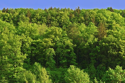 trees  mountain forests  forest