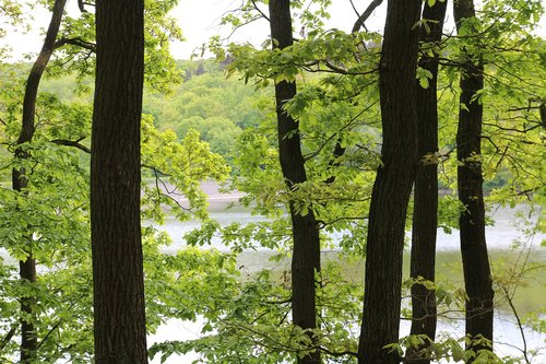 trees  lake  steinbach dam