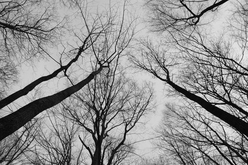 trees  sky  monochrome