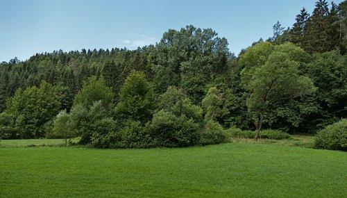 trees  meadow  landscape