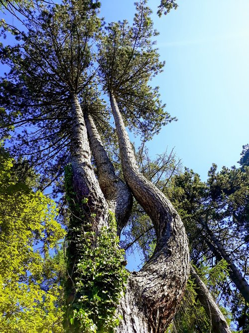 trees  force  form