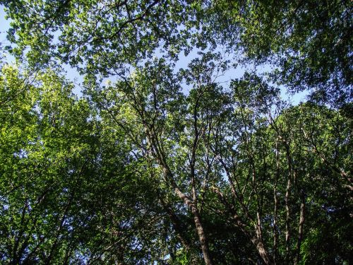 trees,nature,green,aesthetic,leaves,branch,color,shades of green,green green,canopy,branches,foliage,yellow green