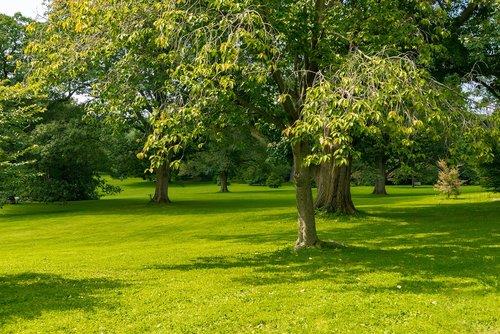 trees  peaceful  calm