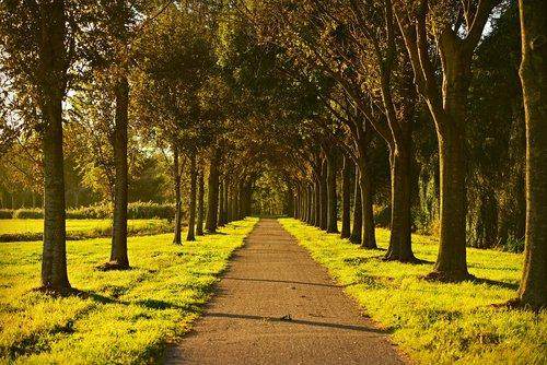 trees  lane  tree lined