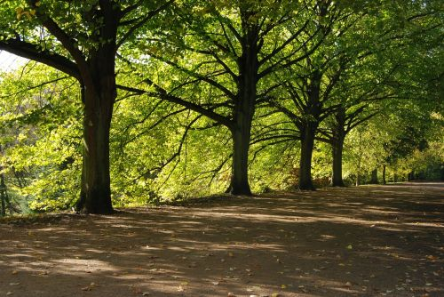 trees shady green