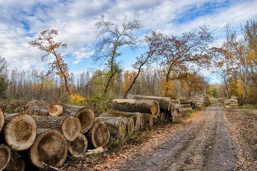 trees  logging  firewood
