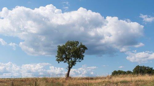 trees  a single tree  lone tree