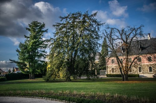 trees  park  castle