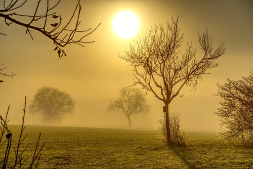 trees  sun  backlighting