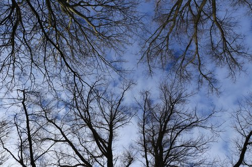 trees  treetops  branches