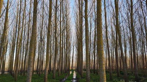 trees  swamp  nature
