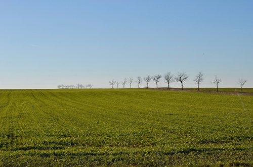 trees  arable  field
