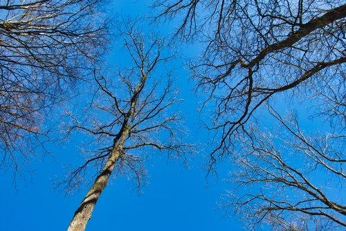 trees  sky  blue