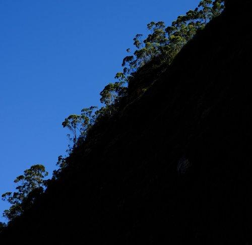 trees  eucalyptus forest  eucalyptus trees