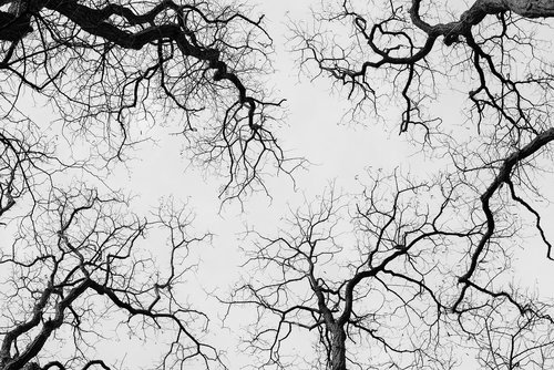 trees  treetops  highinthesky