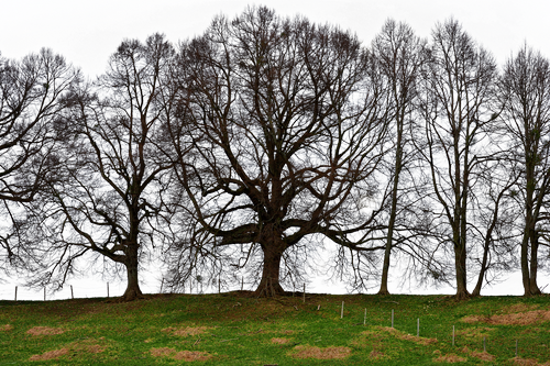 trees  grove of trees  meadow