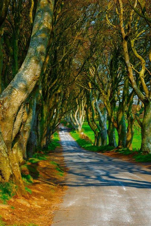trees  dark hedges  ireland