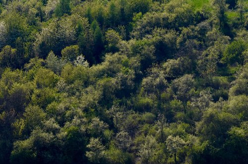 trees  deciduous forest  forest