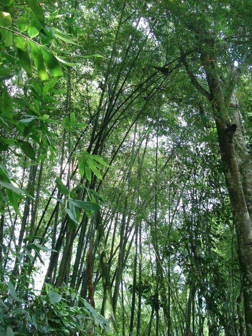 medžiai,gamta,ekologija