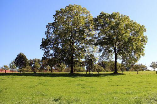 trees individually nature