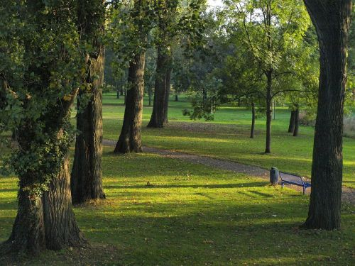 trees poplars park
