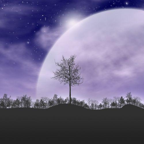 trees starry sky silhouette