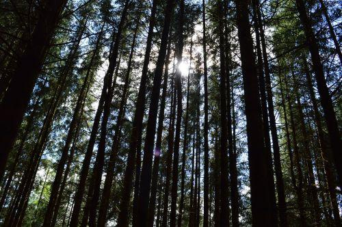 trees sunlight atmospheric