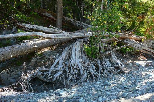 trees fallen dead