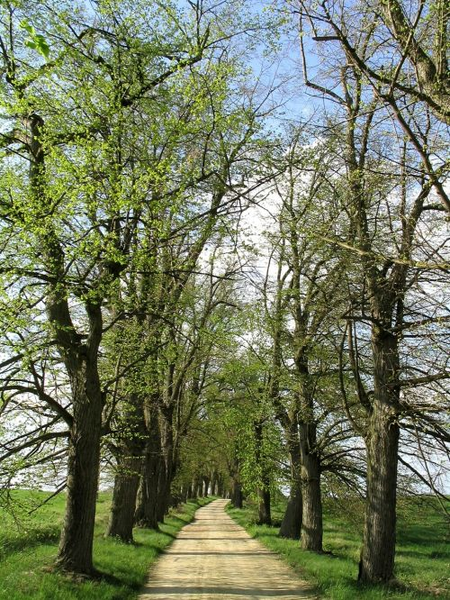 trees avenue away