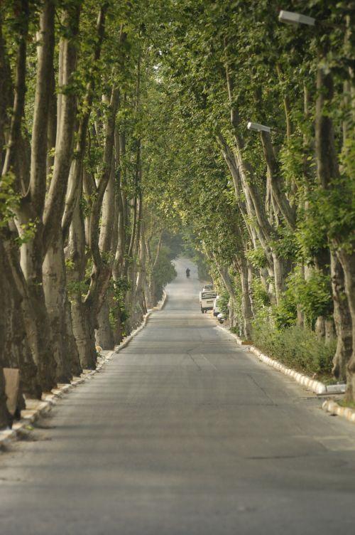 trees road parkway
