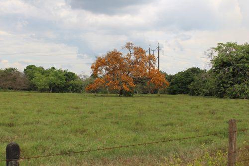 trees summer savannah
