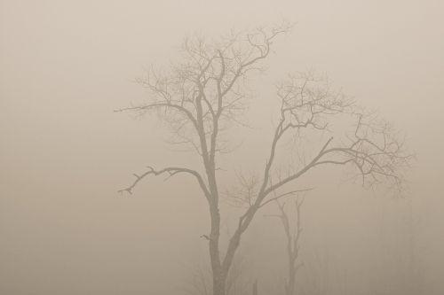 trees fog haze