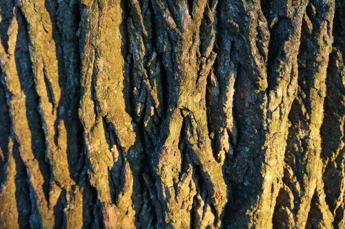 trees bark woods