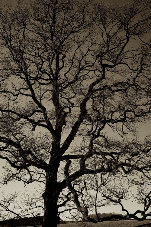 trees silhouette dark